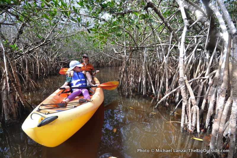 Everglades, East River, mangrove tunnels